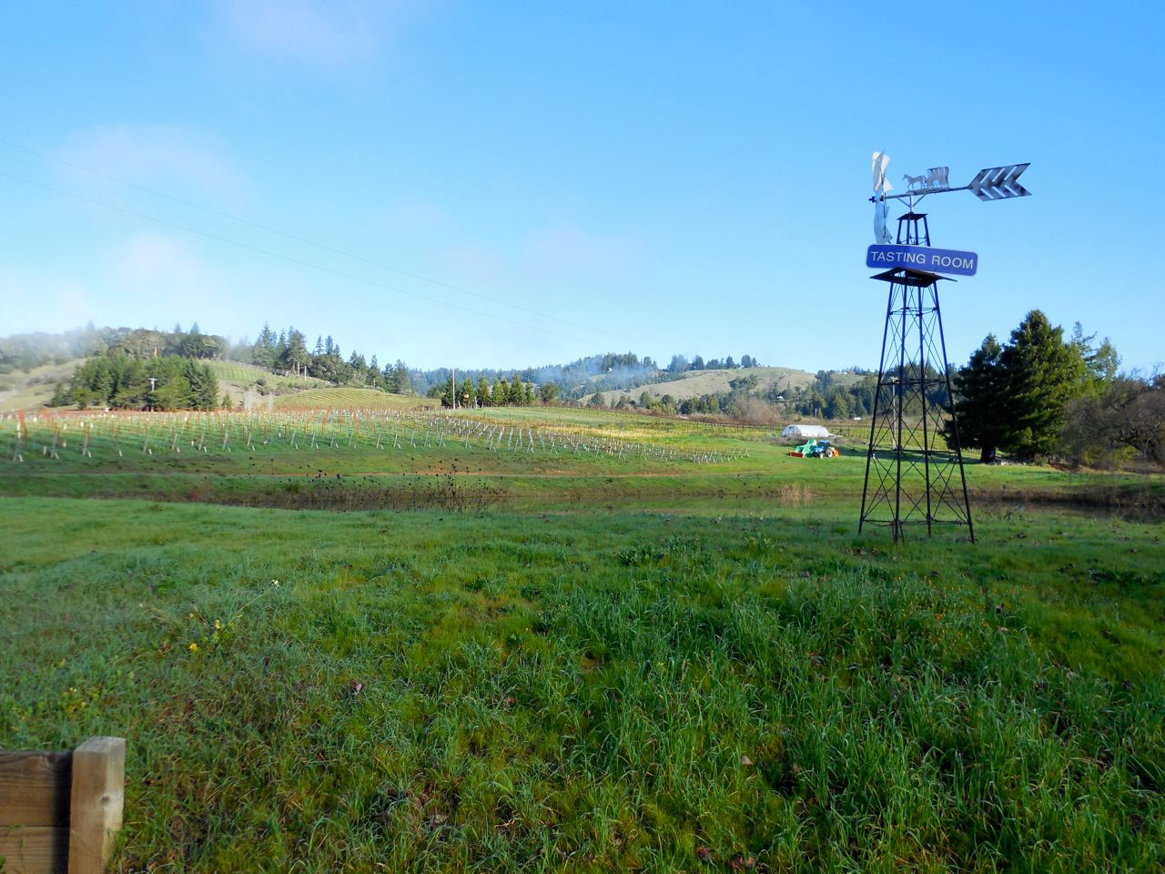 Lula Cellars Home Vineyard at the estate in the #AndersonValley's Deep-End area.