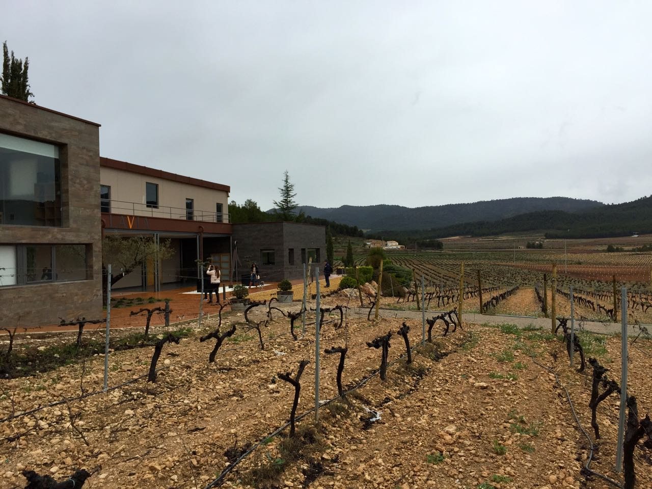 MGWines Group's Bodegas Lavia, in DO Bullas.